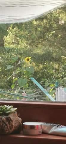 Warum habe ich angst vor sonnenblumen? (Gefühle, Pflanzen)