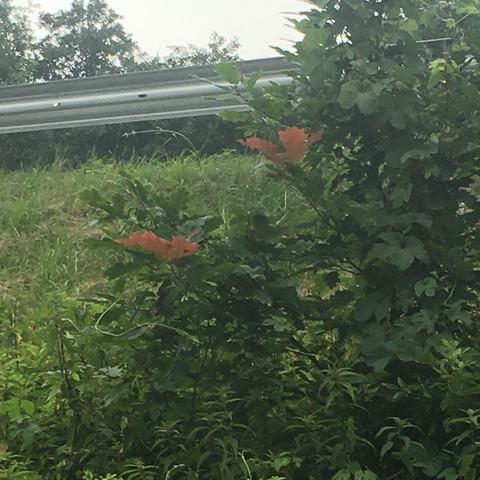 Die Blätter da - (Farbe, Baum, braun)