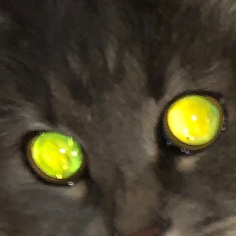 Katze hat unterschiedlich große pupillen