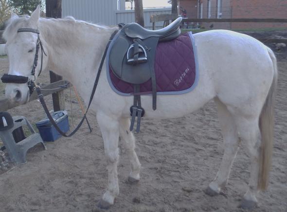 Früher - (Pferde, reiten, Pony)