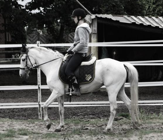 Heute  - (Pferde, reiten, Pony)