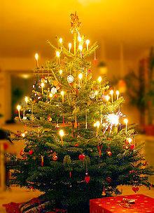 Weihnachtslieder Oh Tannenbaum.Warum Heißt Es In Dem Weihnachtslied Oh Tannenbaum Wie Grün Sind