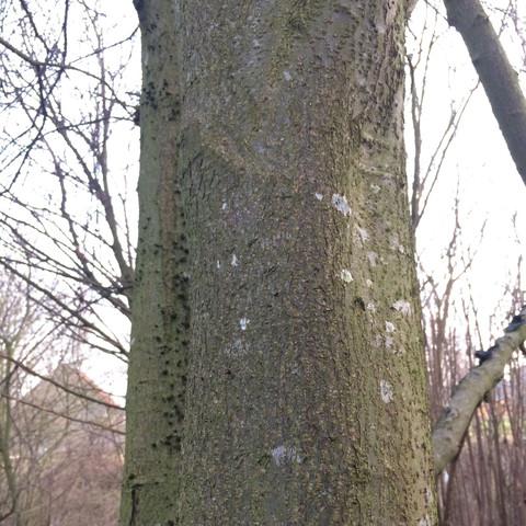 Bild 2 - (Baum, grün, giftig)