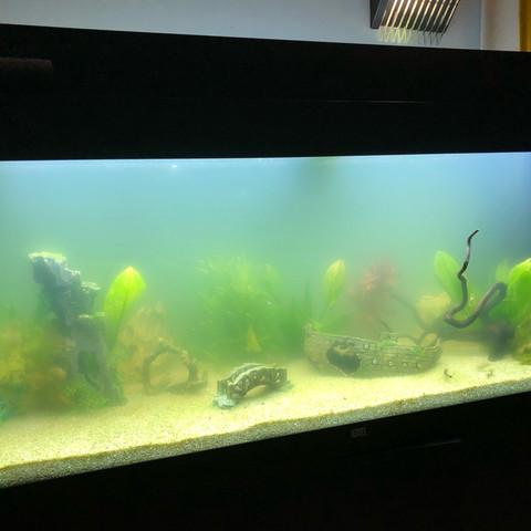 warum ist mein wasser im aquarium tr b trotz aktivkohle. Black Bedroom Furniture Sets. Home Design Ideas