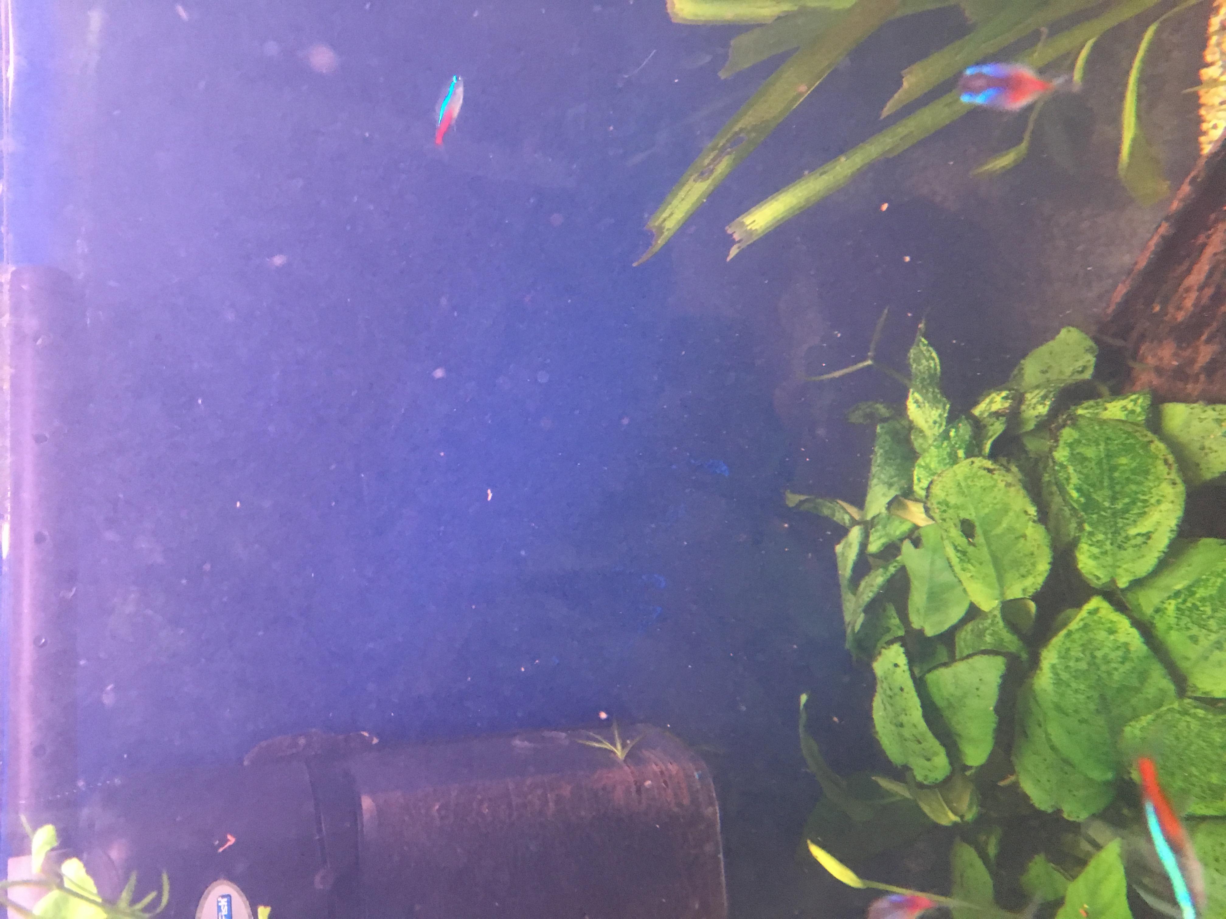 warum ist mein wasser seit 2 wochen so tr b aquarium aquaristik. Black Bedroom Furniture Sets. Home Design Ideas