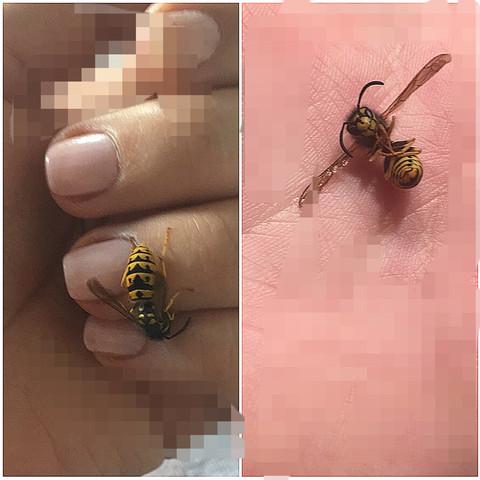 Warum Sterben Bienen Wenn Sie Stechen