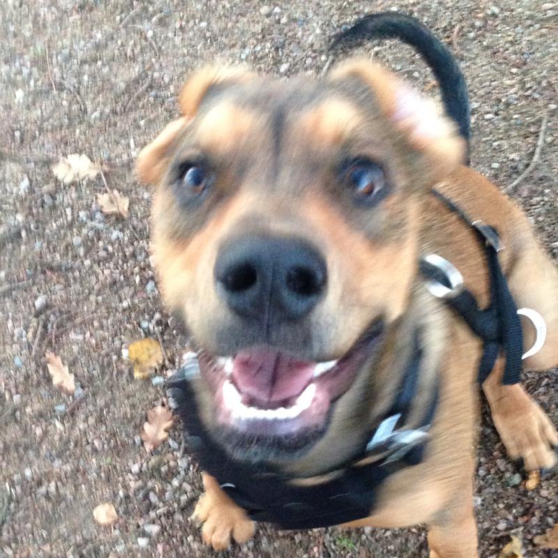 Hund Hat Warme Ohren