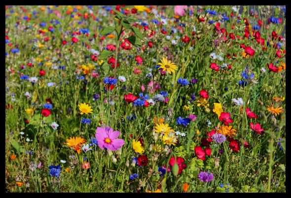 Warum können Menschen sich nicht einfach an einer Blumenwiese erfreuen,sondern zerstören sie?