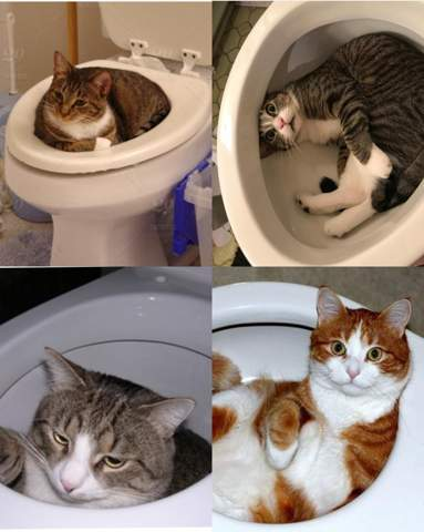 Warum legen sich Katzen ins Klo?