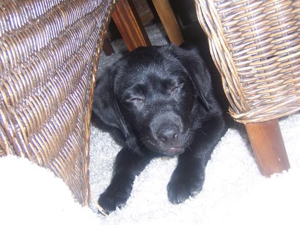 Das ist die kleine - (Hund, Pipi vom Hund)