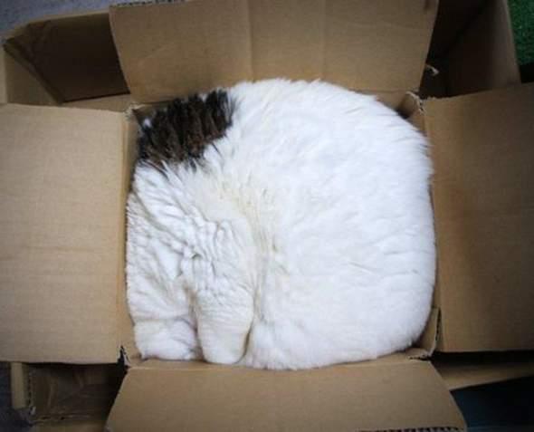 Warum mögen Katzen es sich in Kartons zu quetschen?