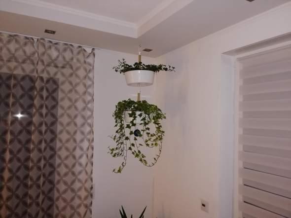 - (Pflanzen, Garten, Natur)
