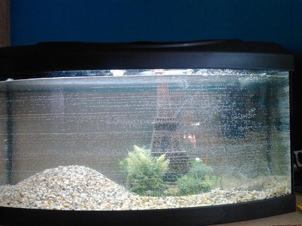 Fischbecken - (Fische, Aquarium)
