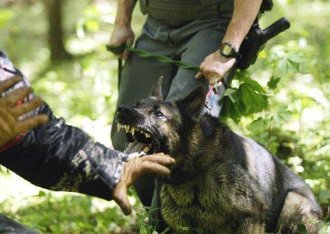 Diensthund - (Hund, agility, Diensthund)