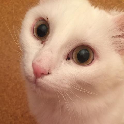 Rotes Auge und stelle sind hier besonders gut zu sehen  - (Augen, Katze, Haustiere)