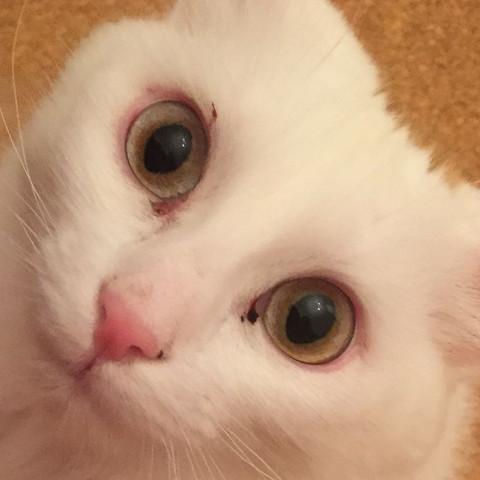 Katze Rotes Auge