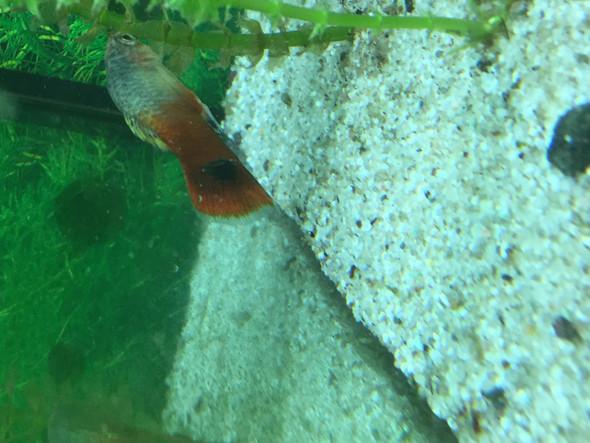 warum stehen bei meinem fisch schuppen auf fische