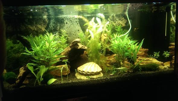 komplette Ansicht - (Aquarium, Aquaristik)