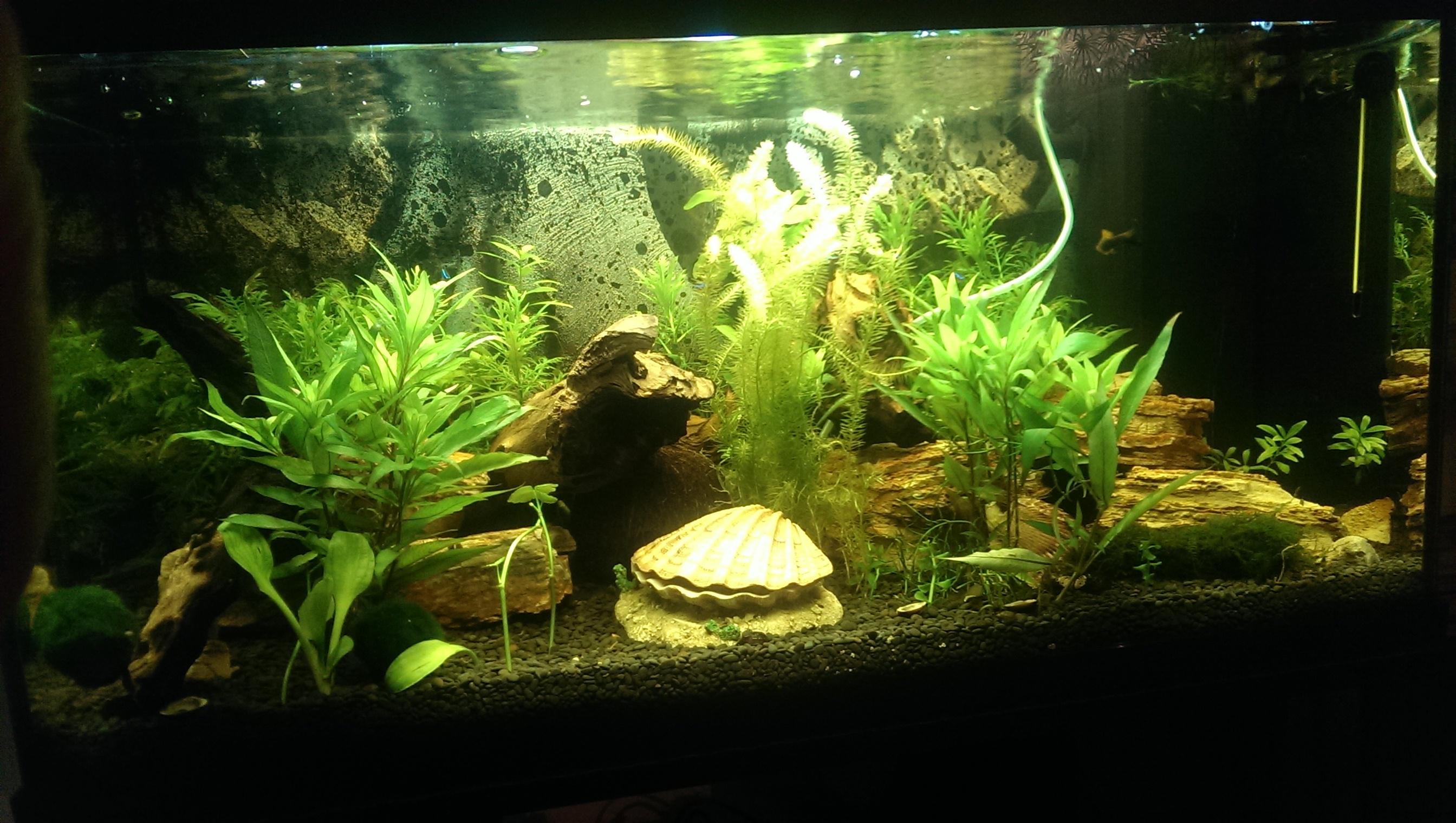 warum stehen meine fische im aquarium aquaristik. Black Bedroom Furniture Sets. Home Design Ideas