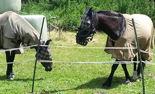 Pferde - (Pferde, Maske)