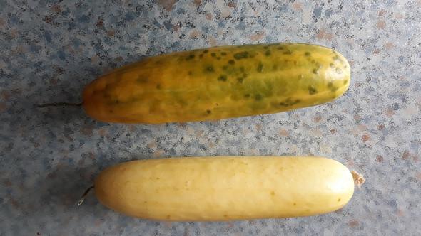 - (Gemüse, Nahrungsmittel, gurken)