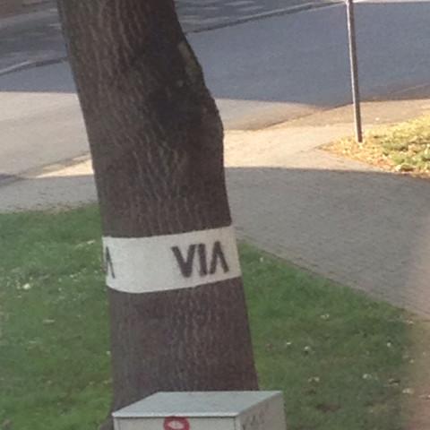 Was bedeutet das Zeichen am Baum  - (Baum, Bezeichnung)