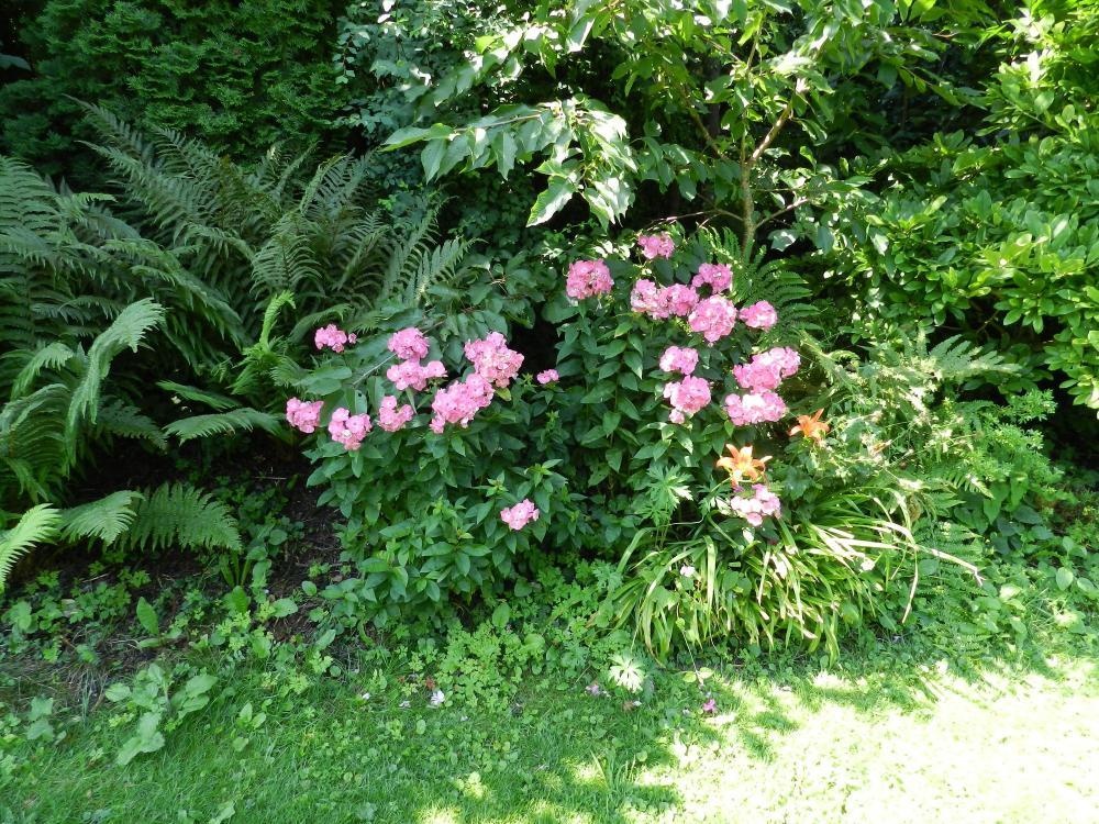 Was Blüht Denn Da In Unserem Garten? (Pflanzen, Blumen, Rosa