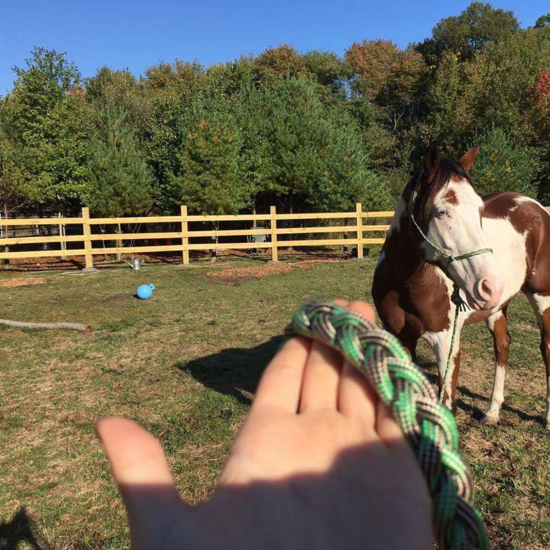 Was braucht man um pferde auf eigenem grundst ck zu halten for Was braucht man