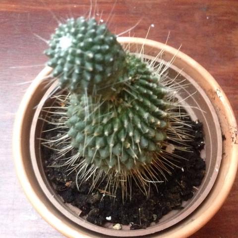 Was das für ein Kaktus?