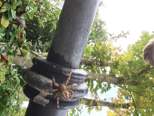 Die Spinne  - (Tiere, Biologie, Natur)