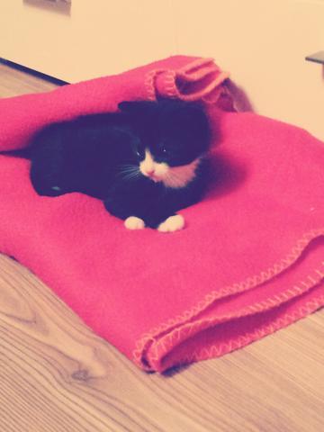 Das ist die Kleine :) - (Katze, Katzen, Katzenbaby)
