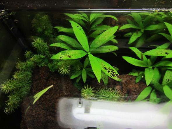 was fehlt meinen pflanzen im aquarium aquaristik d nger. Black Bedroom Furniture Sets. Home Design Ideas