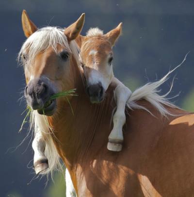 Was finden manche Menschen so toll an Pferden?