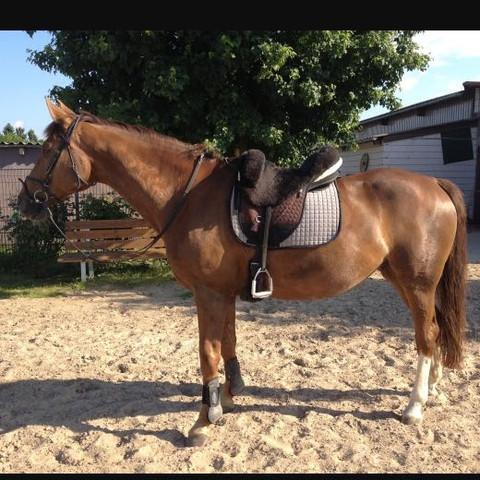 Englisch  - (Tiere, Pferde, Reiten)