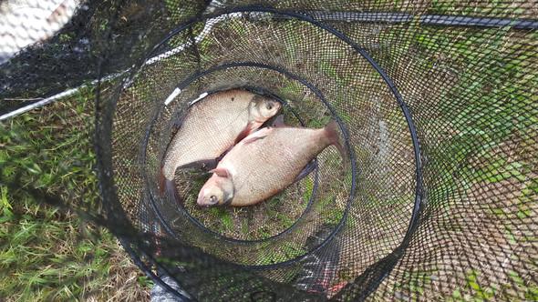 - (Fische, angeln, fischen)