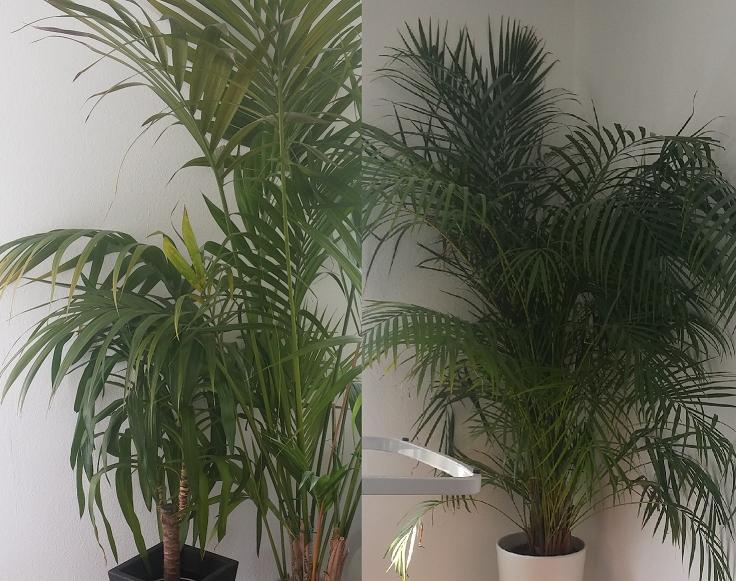 was f r blumenerde f r palmenartige zimmerpflanzen garten pflanzen natur