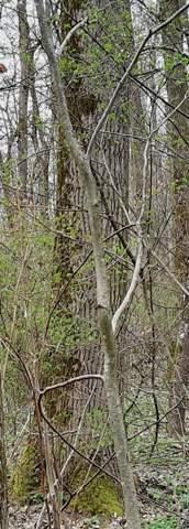 Was für ein Baum ist das?