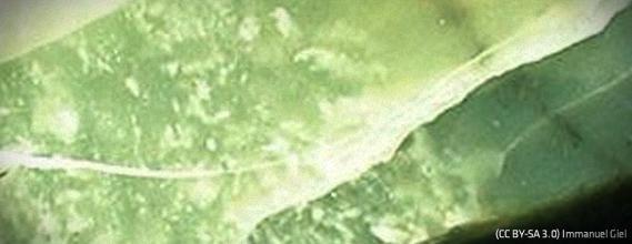 der stein - (Garten, grün, Steine)