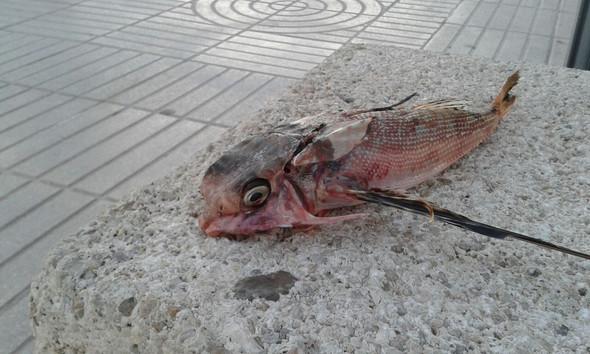 Bild 1 - (Fische, Meer, Strand)