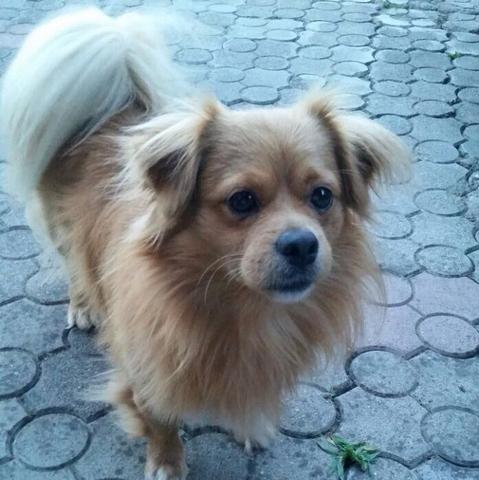 So zuckersüß - (Hund, Bosnien, Straßenhunde)