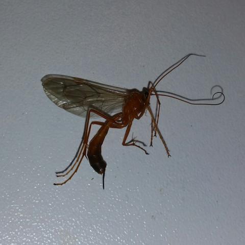 Insekt - (Tiere, Insekten, Stich)