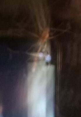 Was für ein Insekt habe ich am Fenster?