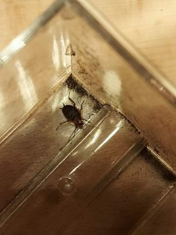 Was für ein Insekt ist das?
