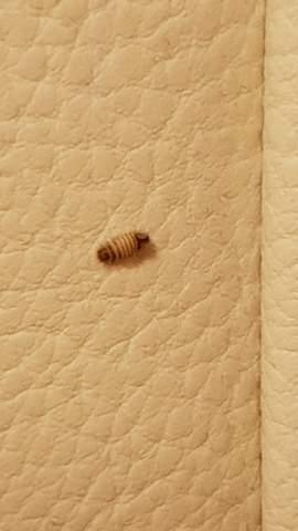 Was für ein Insekt könnte das sein (raupe)?