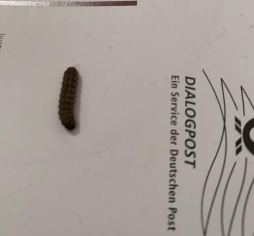 Was für ein Insekt/ Wurm ist das?