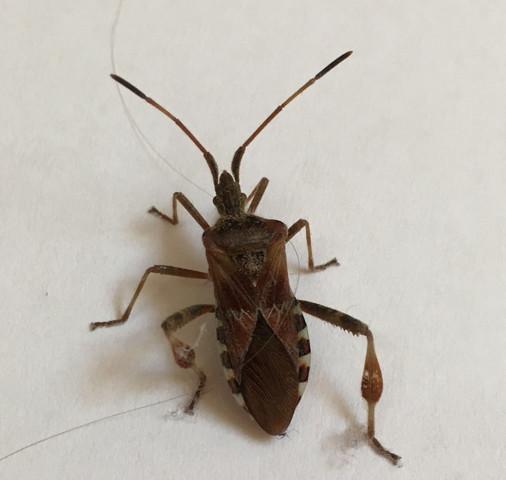 was f r ein k fer ist das hier auf dem foto insekten erkennung. Black Bedroom Furniture Sets. Home Design Ideas