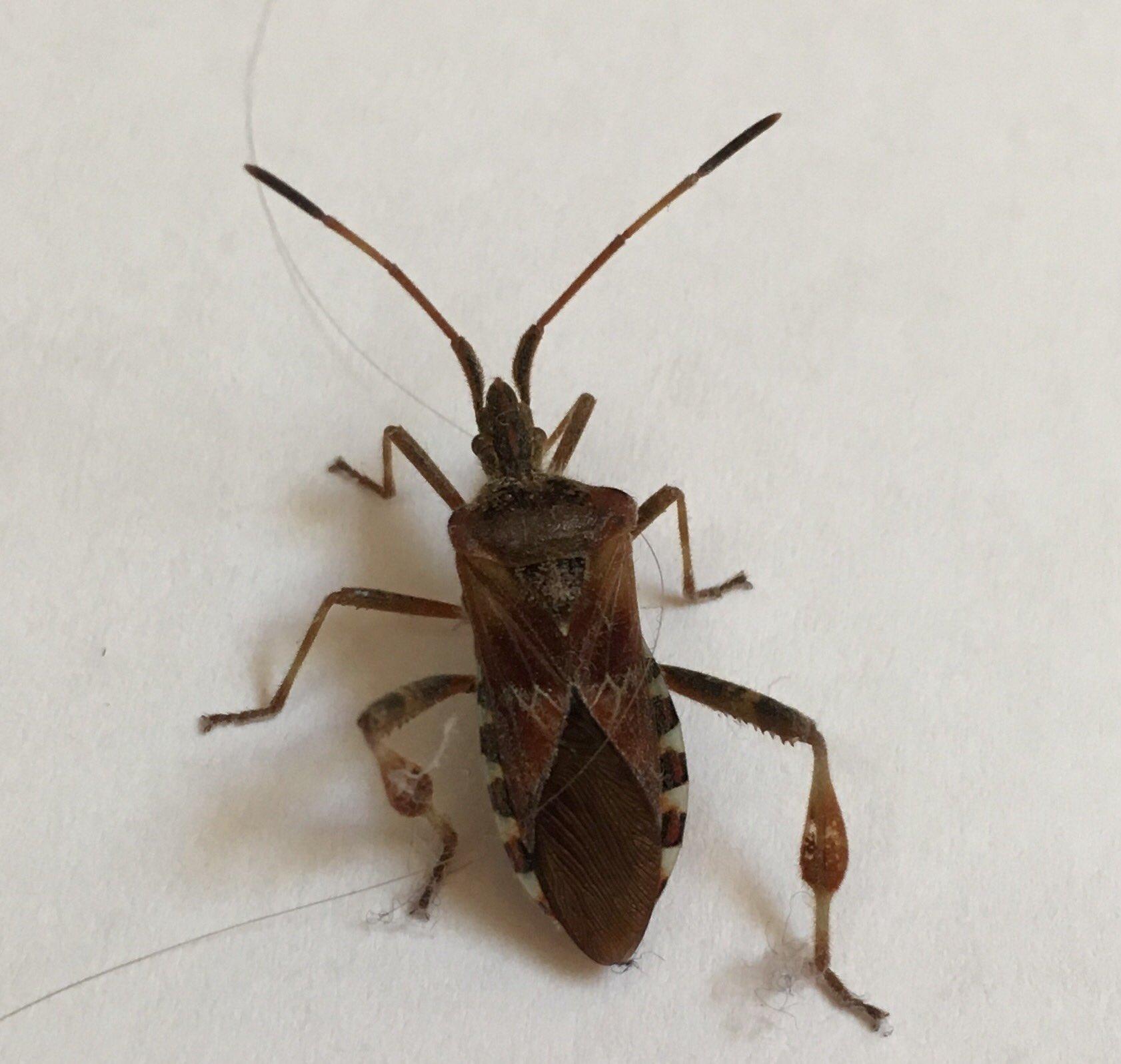 Was für ein Käfer ist das hier auf dem Foto? (Insekten, erkennung)