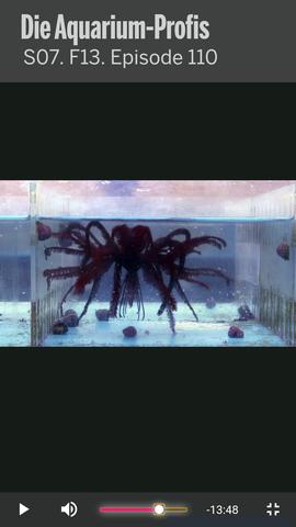 - (Aquarium, Lebewesen, DMAX)
