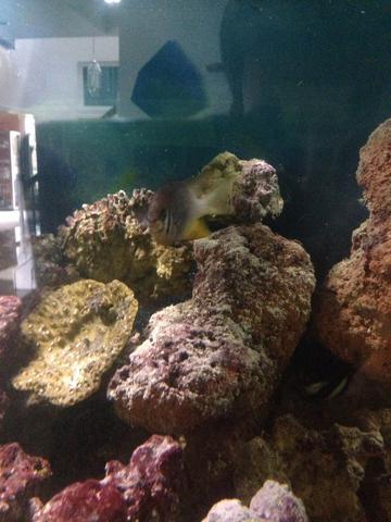 Bild 1 - (Fische, Aquarium, Aquaristik)