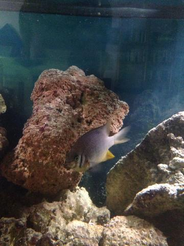 Bild 2 - (Fische, Aquarium, Aquaristik)
